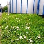 Blumen auf der Kläranlage