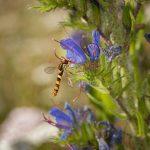 Blume mit Libelle